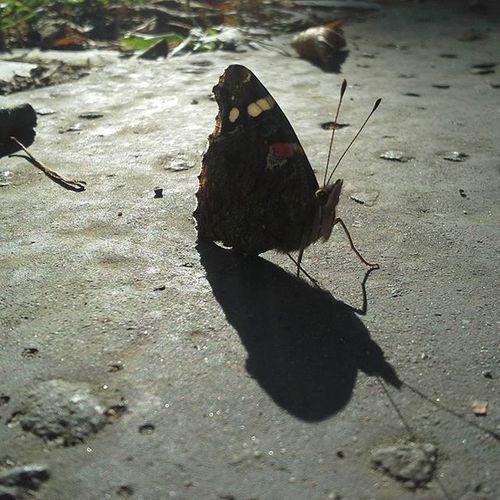 100photos Fiftysecond Butterfly Nice Sunlight Shadow