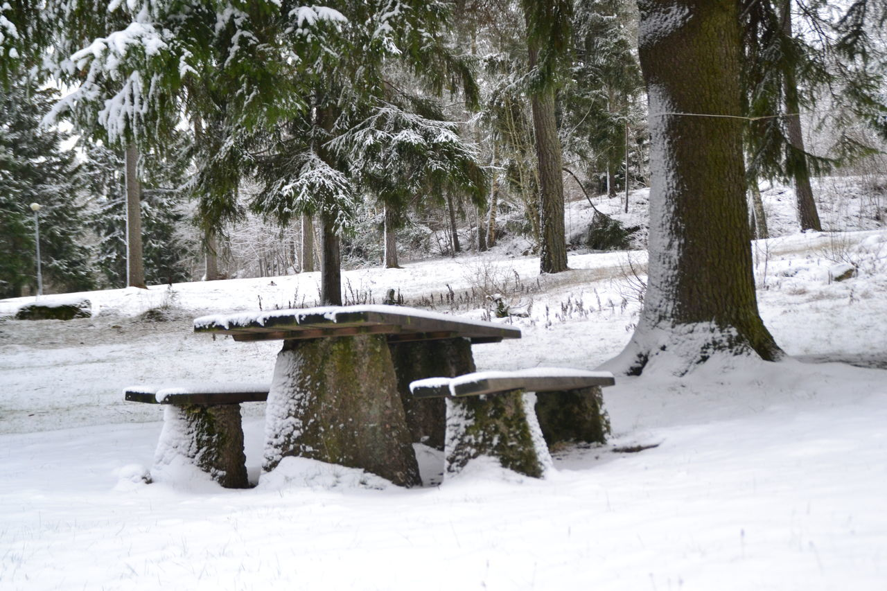 It's Cold Outside Winter Scandinavia Cold Weather Snow Northern Europe Snow ❄ Norrköping Bench Wooden Table Sweden Scandia View January Trees Forest In The Forest Nature Winter Scene