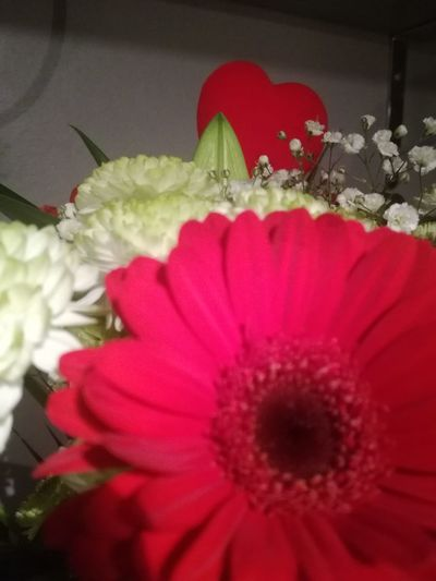 Hello World Taking Photos Valentine's Day  Happy Valentines Day Flower Head Flower Red Beauty In Nature Photography Photographer Photograph Photographie  EyeEm EyeEm Gallery