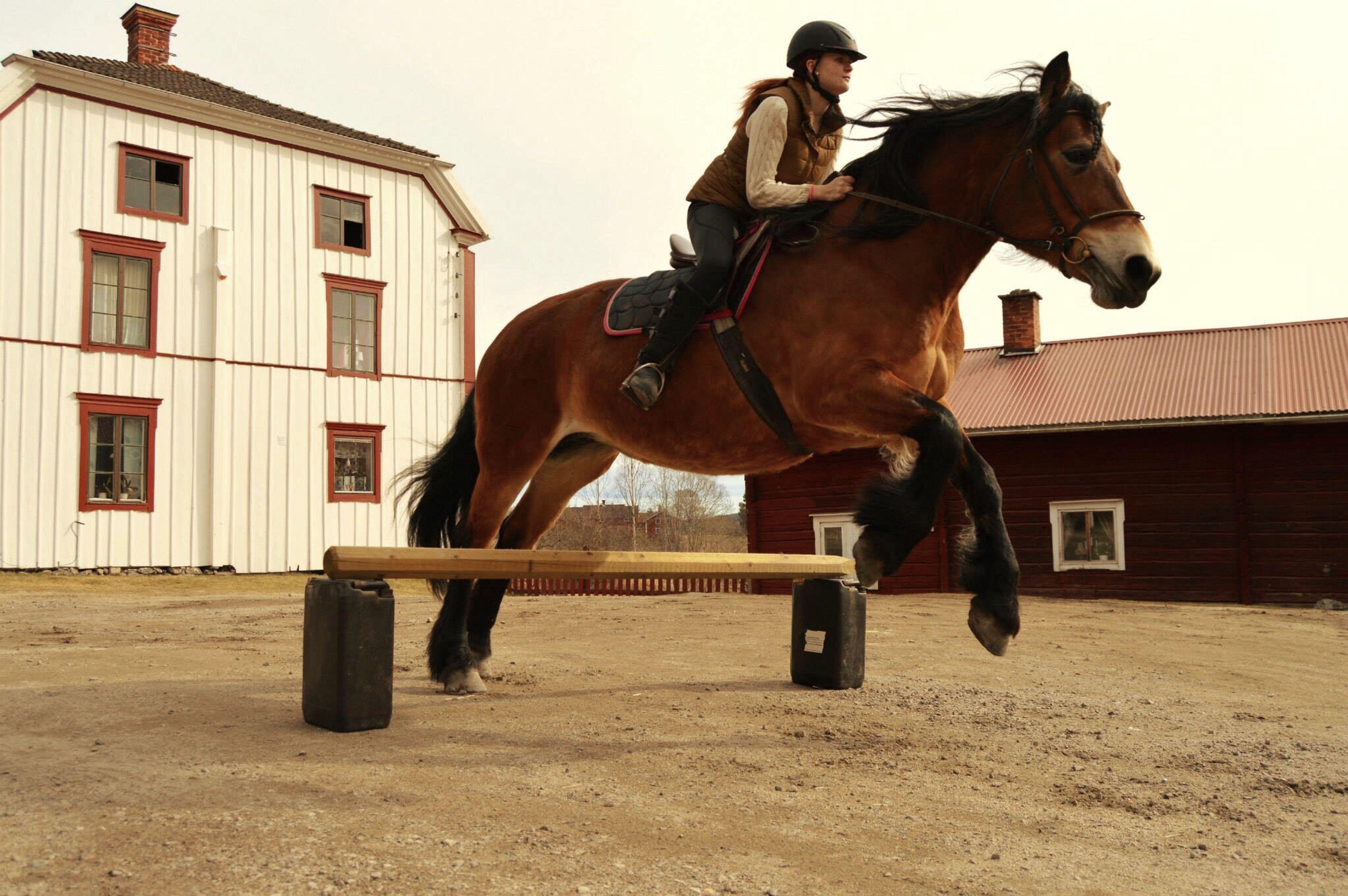Visa❤️ Horse Jumping Horse Bruksnordsvensk Photo Jumpshot Lovely