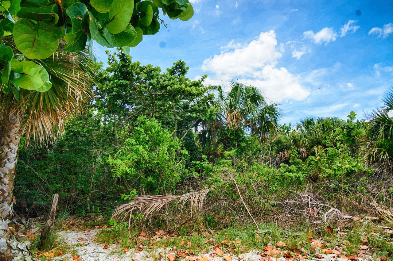 luah tropical jungle on the shore of the Florida beaches Bahamas Beach Forest Getaway  Isolated Jungle Mangrove No People Plant Secluded  South Florida Tropical Vacation Destination