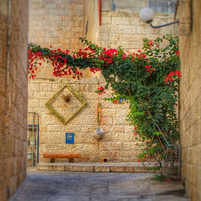 A small Flower Garden in Jerusalem inside the Jewishquarter of the Oldcity in Israel DSLR