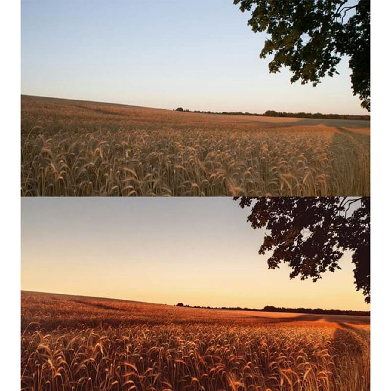 "A ""before and after"" picture. I am always amazed at how much you can get out of images. Beforandafter Michaellangerfotografie Summer Sunset Fotografie Photography Photographyislife Germany Brandenburg CripixtMovement Earthshoot"