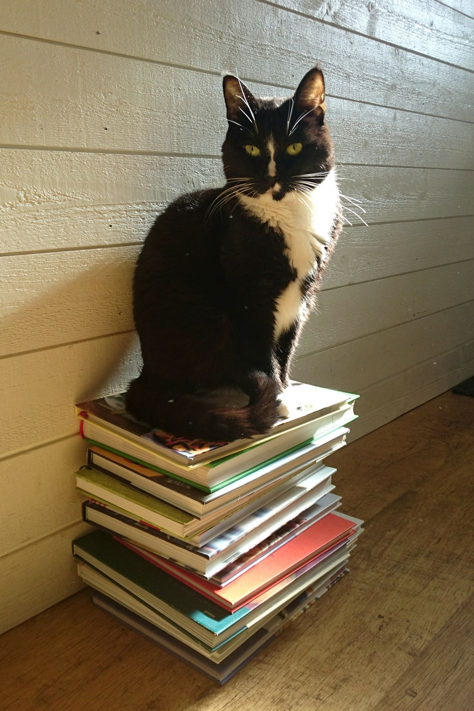 Cat Cat Lovers Pet Enjoying Life Enjoying The Sun Tranquility Peace And Quiet Black Cat Book Books Clean Shot One Cat