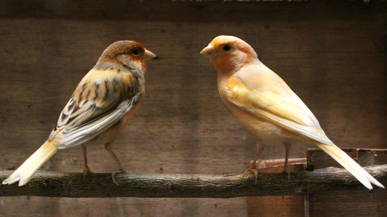 Relationship goals for birds Animalphotography Indonesia_photography LovePhoto INDONESIA Fulltrueloveofbird in Cimahi Bandung Indonesia