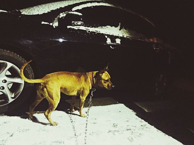 Evening Walk Snow ❄ Love My Boy ☺️❤️