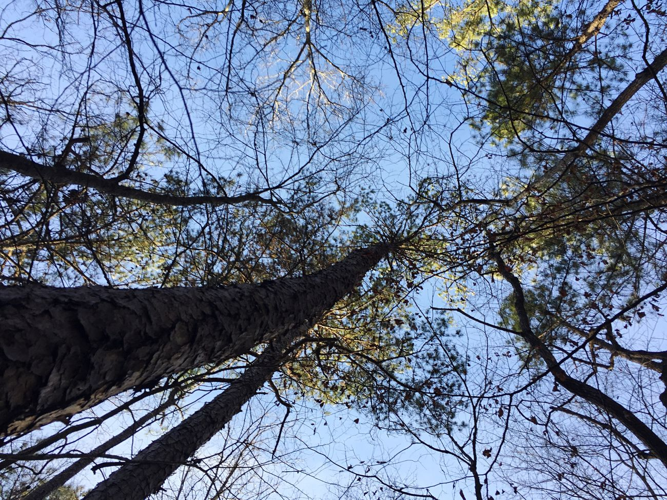 Trees Tree Forest Low Angle View Branch Nature Bare Tree Growth Outdoors Beauty In Nature Sky Day No People Garden Botanical Gardens Hike Hiking