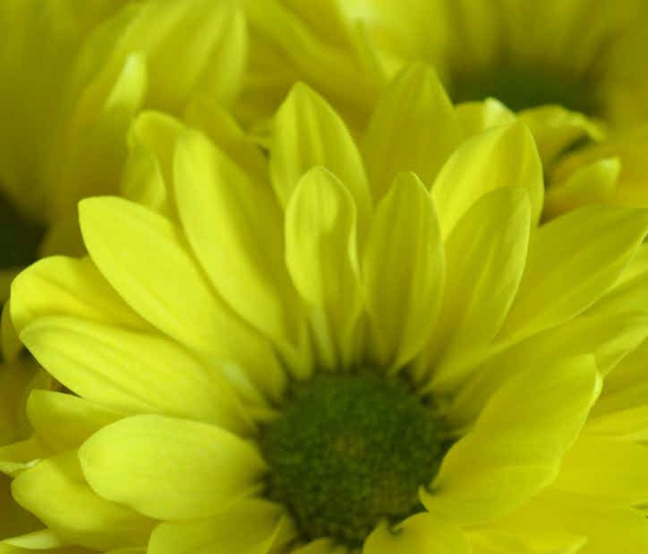 flower, plant, green color, nature, macro, freshness, fragility, close-up, yellow, petal, flower head, beauty in nature, growth, leaf, backgrounds, no people, day, beauty, herbal medicine, outdoors