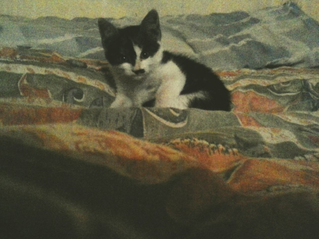 Hi! RelaxingKitty Cat Littlecat  Cute :) Enjoying Life Followback Follow Me :) Like4like Seguime Y Te Sigo