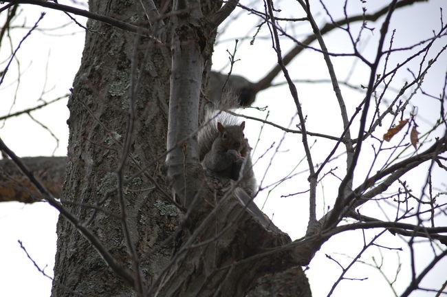 EyeEm Nature Lover EyeEm Best Shots Squirrel Mohonk Mountain House Hudsonvalley