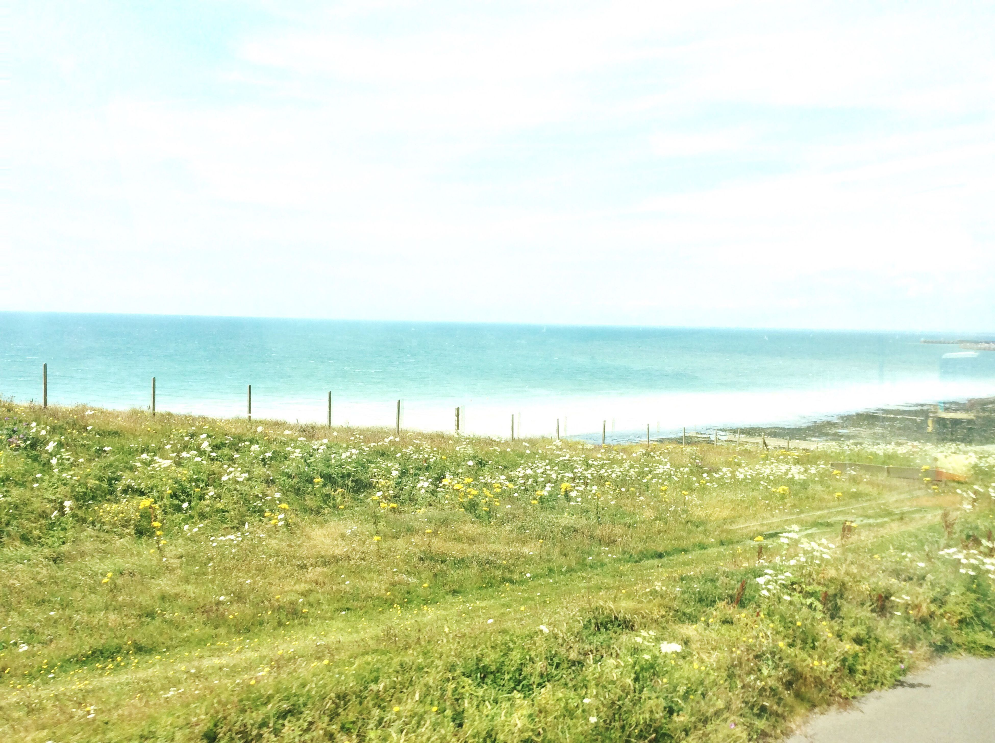 sea, horizon over water, water, grass, tranquil scene, tranquility, beach, scenics, sky, green color, shore, beauty in nature, plant, nature, idyllic, day, ocean, wooden post, non-urban scene, remote, calm, blue, solitude, growth, grassland, outdoors, grassy, green, coastline, cloud - sky, no people, footpath, leading