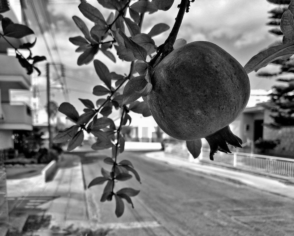 Trees Pomegranate Fruittrees Fruits And Vegetables Streetphotography Walking Around Taking Pictures Blackandwhite Street Life Streetview Howiseethings