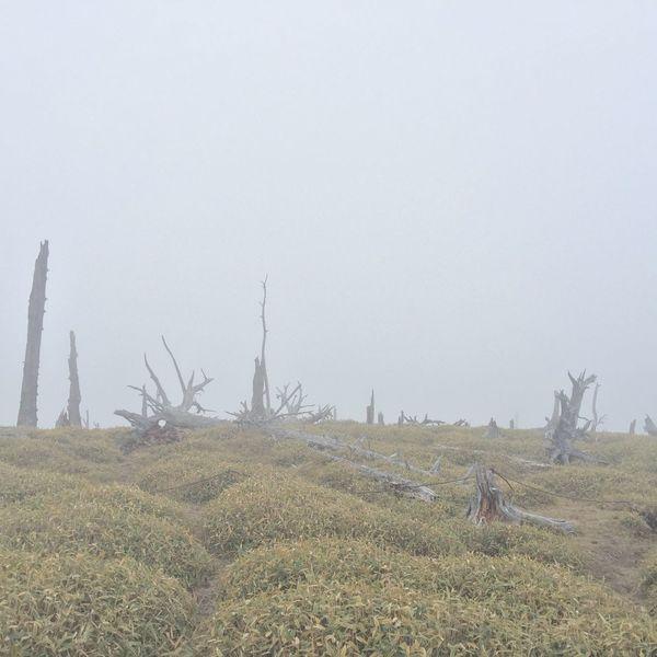 大台ケ原 Nature Outdoors Tree Sky Fog Minimalism Skyporn Nature_collection Mountain Climbing Japan