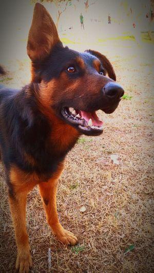 Dog Dogs DogLove Dog Lover Dog❤ Doglover Dog Life Dogs SweetLe Dog Walking Playing With The Animals