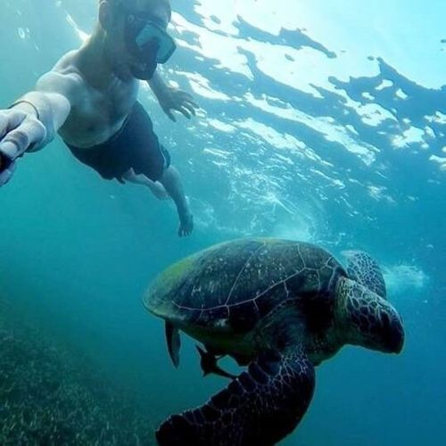 Hello World Check This Out Hi! Enjoying Life Cheese! Love My Job Ocean Thailand ASIA Sea Turtle Swimming No Filters  Wild