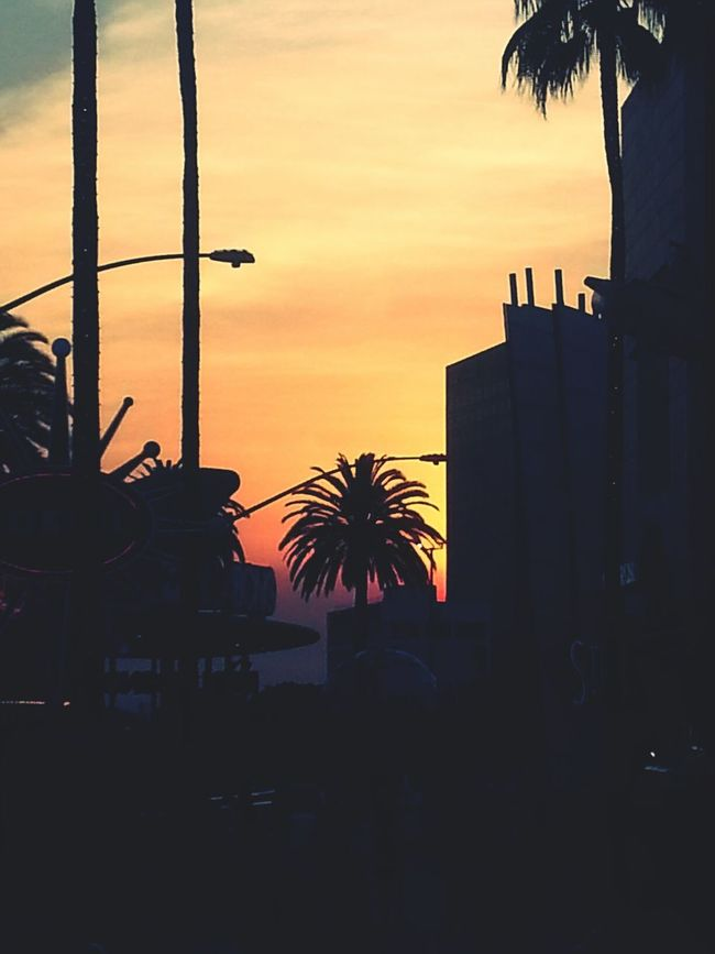 """""""Take my picture, Hollywood!"""" Sunset Los Angeles, California Skyporn Palmera <3"""