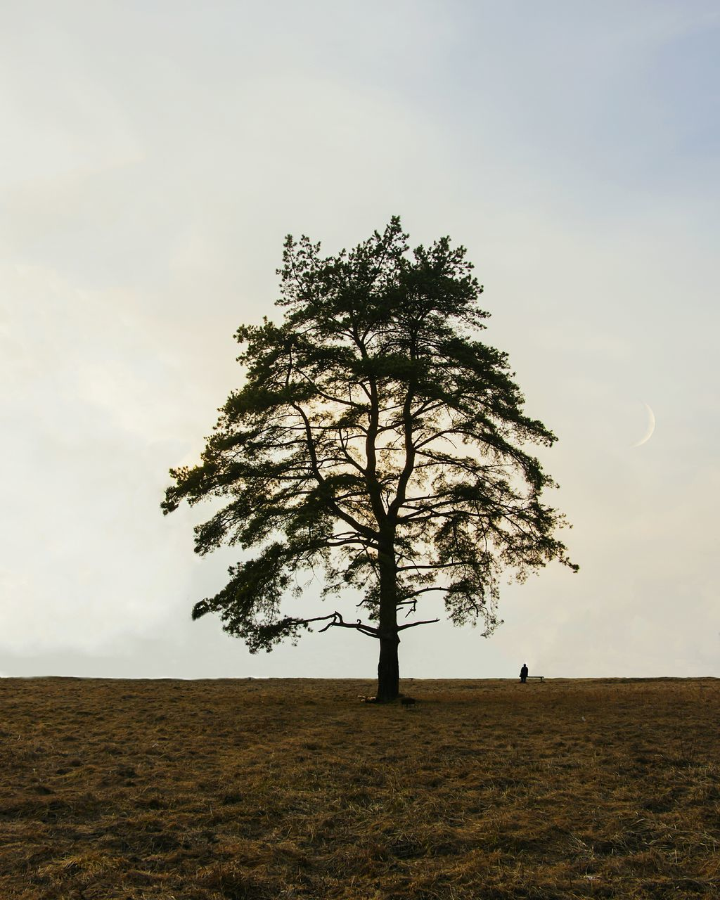 Tree On Grassy Field Against Sky