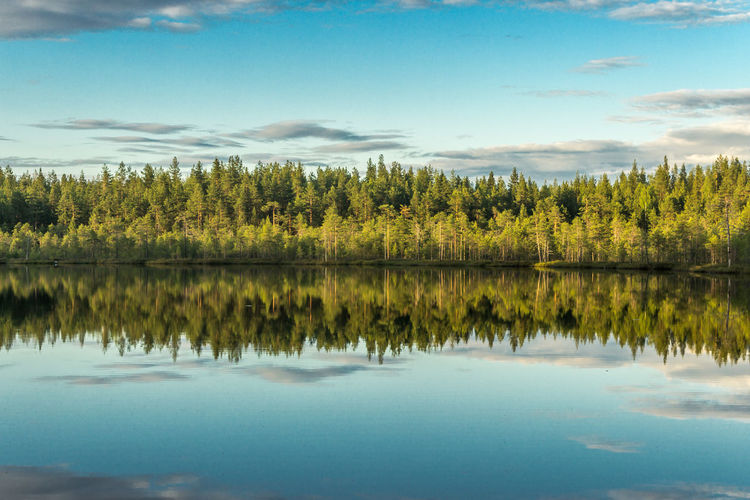 Lake Beauty In Nature Blue Cloud Cloud - Sky Day Idyllic Lake Majestic Nature No People Reflection Scenics Sky Standing Water Tranquil Scene Tranquility Tree Water карелия красота лето озеро Природа Россия
