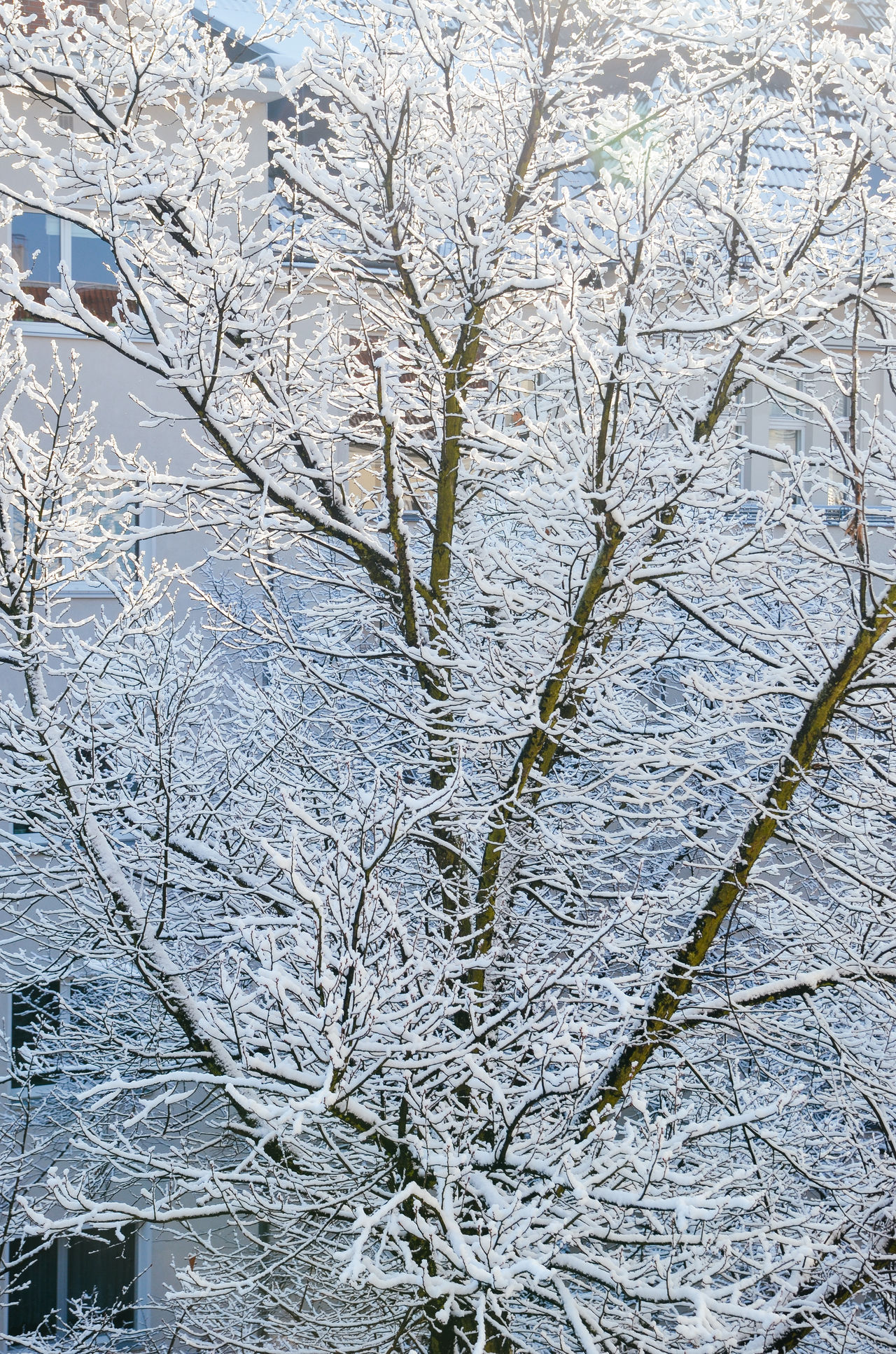 Backgrounds Beauty In Nature Berlin Branch Close-up Day Full Frame Growth Low Angle View Nature Nature No People Outdoors Sky Snow Tree Trees Winter Winter Wonderland Wintertime