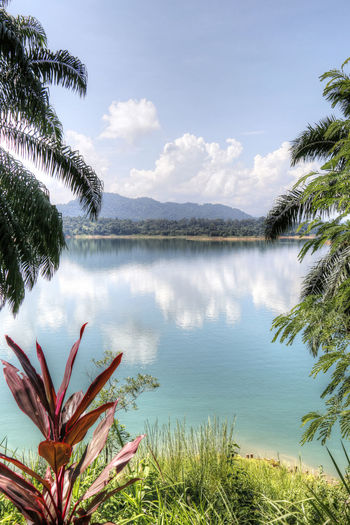 Kenyir lake is the largest man-made lake in South-East Asia. Covering an area of 260,000 hectares, it is home to some 300 species of freshwater fishes. Beauty In Nature Kenyir Kenyir Lake Lake Malaysia Nature No People Outdoors Reflection Sky Terengganu Tree Tropical Tropical Jungle Tropical Paradise Water