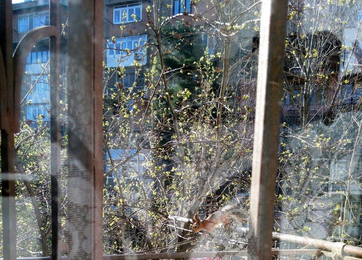 Daymood Granting Happymoment Morning Light Naturegifts 🌈 Squirrel Takemoments