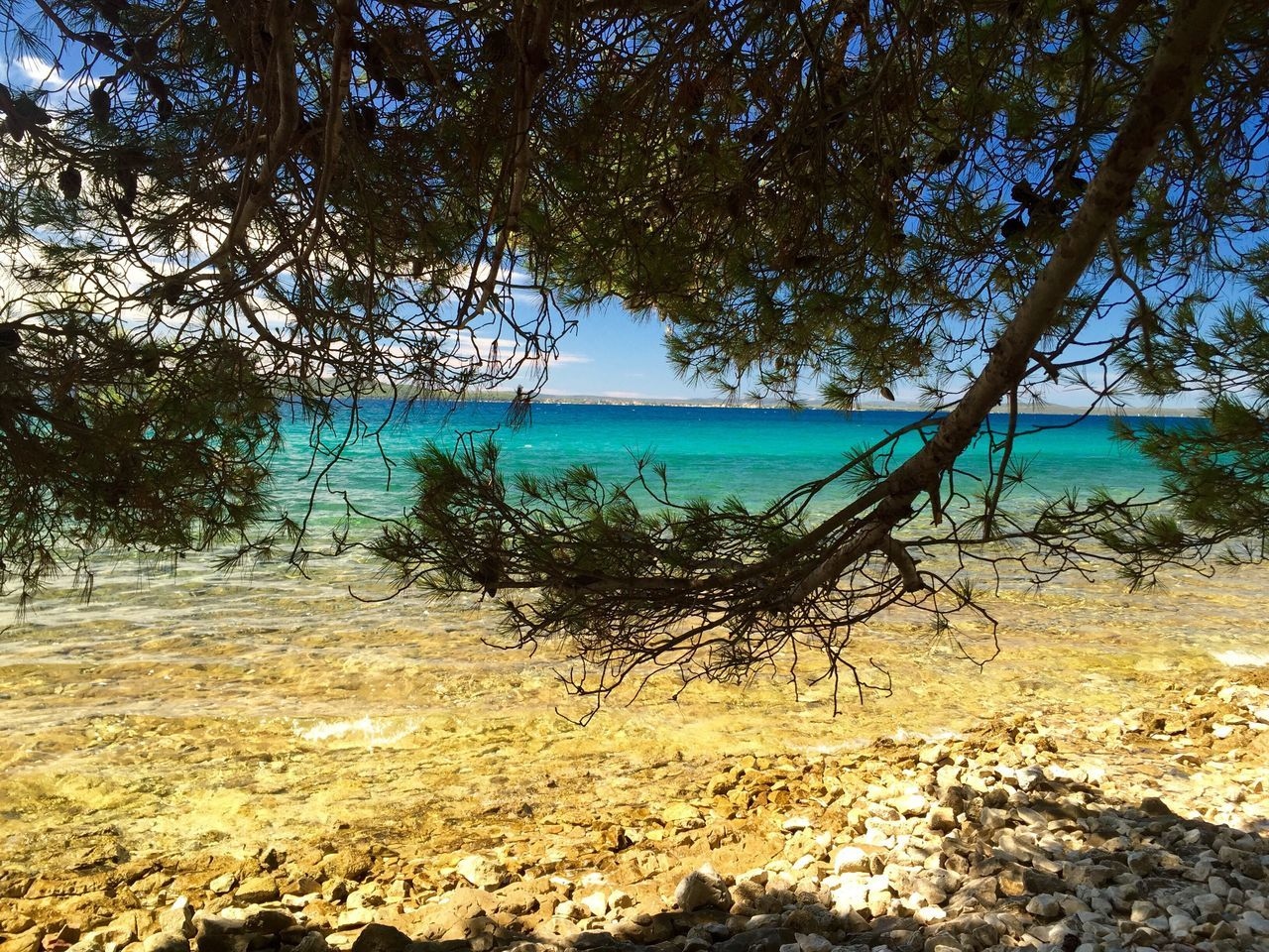 Mallorca Sea Beach Tree Nature Water Scenics Beauty In Nature Tranquil Scene Sand Horizon Over Water Blue Sunlight Growth Travel Destinations Outdoors Day Idyllic Tropical Climate No People