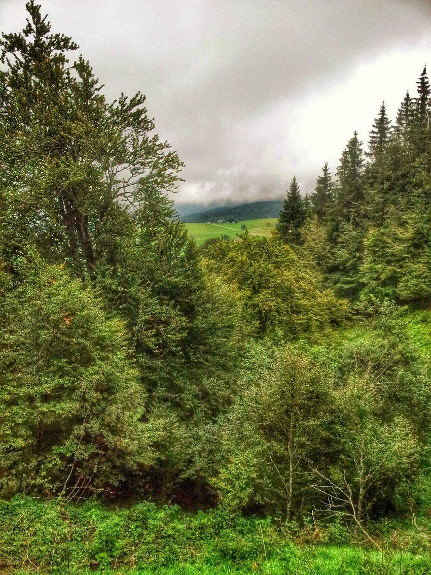 Blick ins Tal Forest Black Forest Edition. Tree_collection  Deutschland. Dein Tag