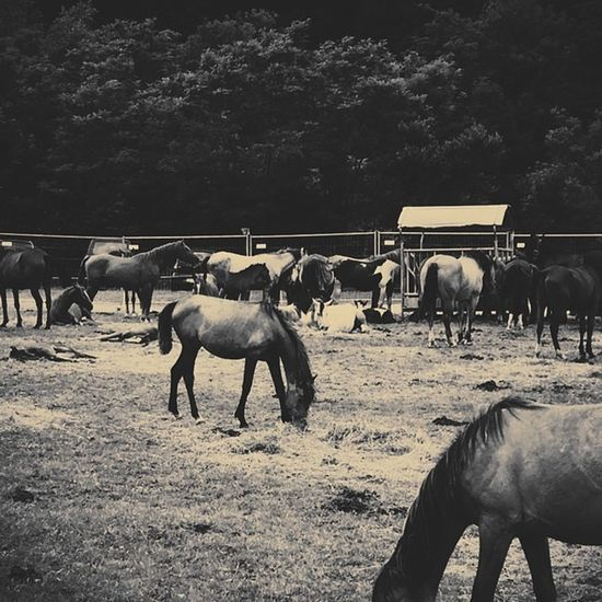 Horses Horse Horsesofinstagram Horseshow Horseshoe Horses_of_instagram Horsestagram Instahorses Wild Mane Instagood Grass Field Farm Nature Pony Ponies Ilovemyhorse Babyhorse Beautiful Pretty Photooftheday Gallop Jockey Rider riders riding