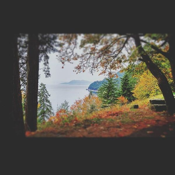 Taking cellphone pictures while on a photoshoot on Chuckanut :) Chuckanut Scenic Water Fall Fallcolors PNW
