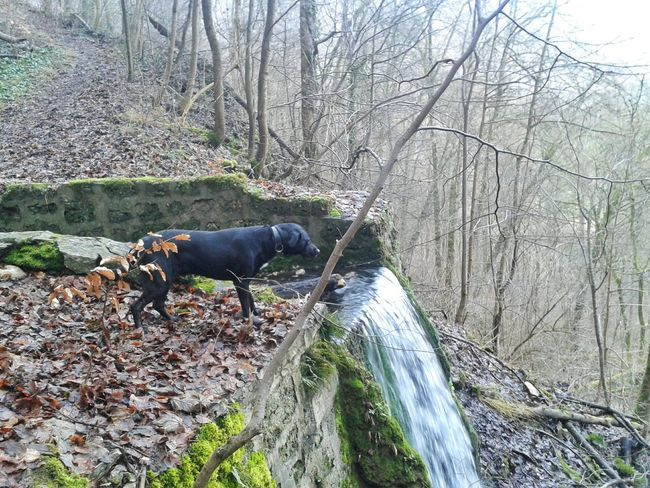 Am Wasserfall. .... First Eyeem Photo My Dogs Are Cooler Than Your Kids Playing With The Animals Hello World