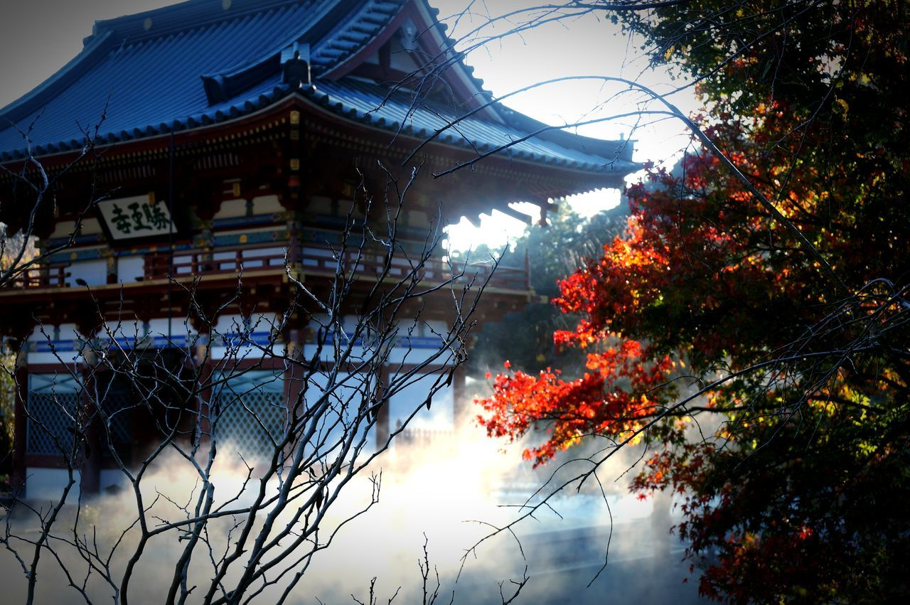 Osaka, Japan Tree Sky Bare Tree Branch Outdoors Built Structure Day Building Exterior No People Nature Architecture 箕面 勝尾寺 和
