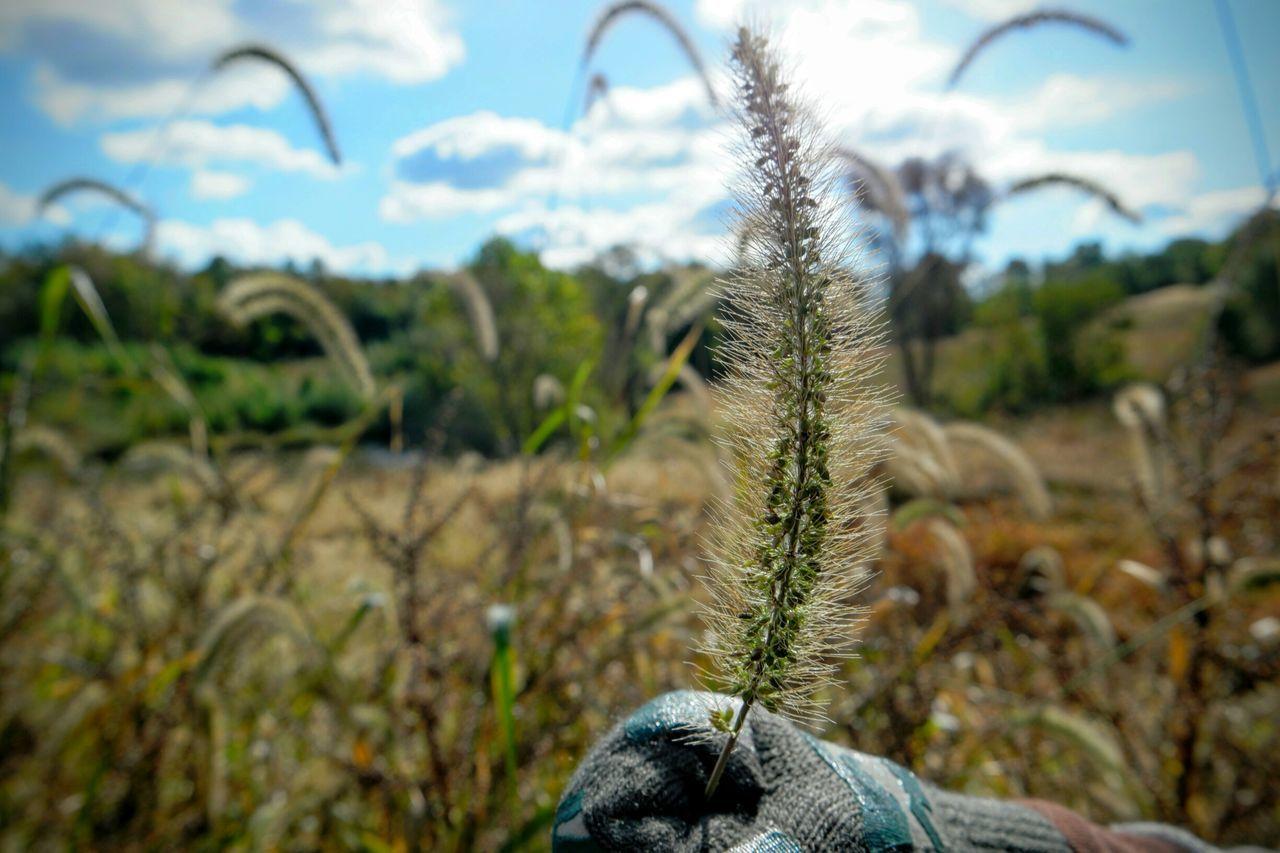 Wild Grasses Tall Grasses