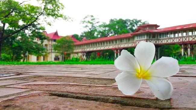 Morning Thailand 🏰🌼🌳⛅
