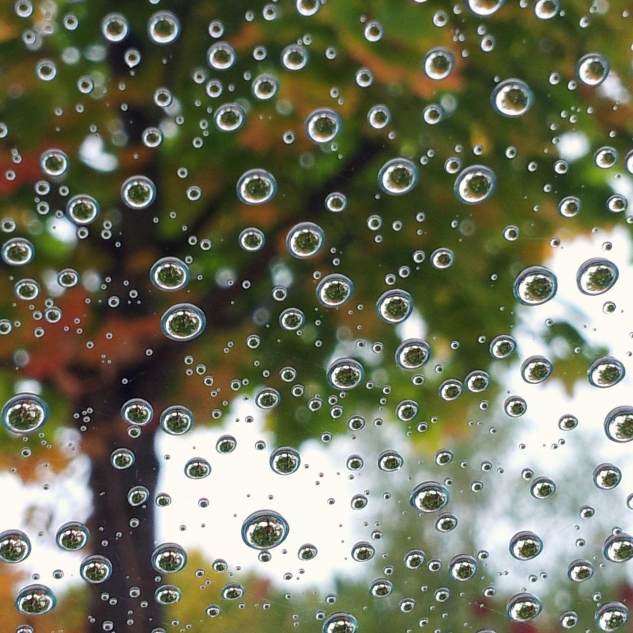 Abstract Blick Durch Ein Glas Blick Durchs Fenster Design Raindrops Simplicity Tree Window