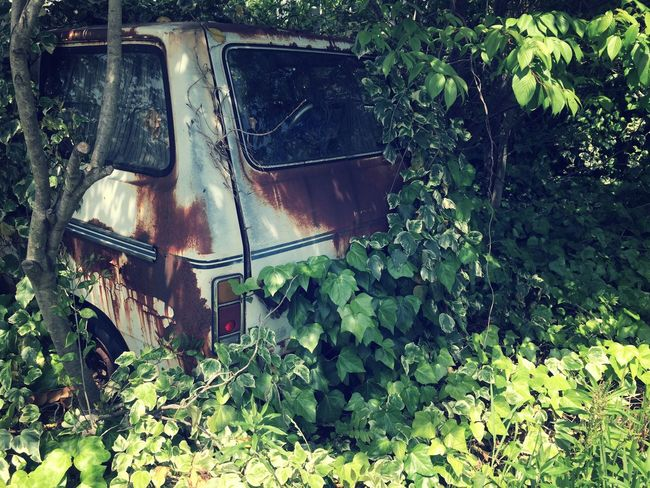 Day Deterioration Ecology Environment Environmental Conservation Grass Grassy Green Green Color Growth Ivy Mode Of Transport Nature No People Obsolete Old Outdoors Overgrown Plant Run-down Rust Rusty Rusty Autos Vintage Weeds