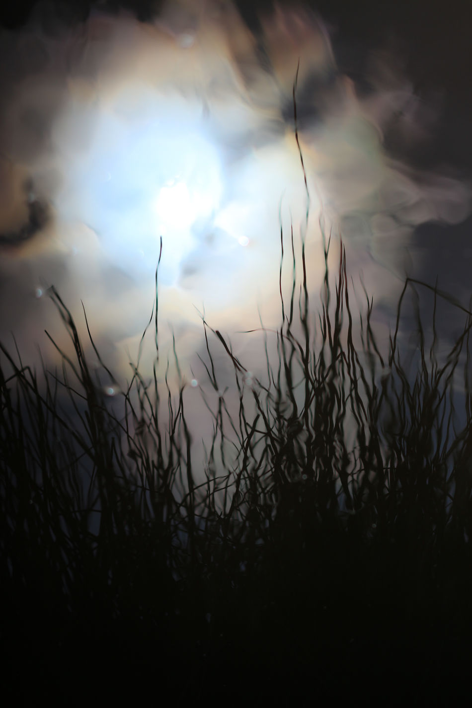 Silhouette Cloud - Sky Nature Dusk Outdoors Sky Landscape Plant Grass Multi Colored No People Rural Scene Pastel Colored Night Beauty In Nature Beautiful Darkness And Beauty Darkness And Light EyeEm Diversity Close-up Dark Art Light In The Darkness Light And Shadows Eyem Gallery Pattern