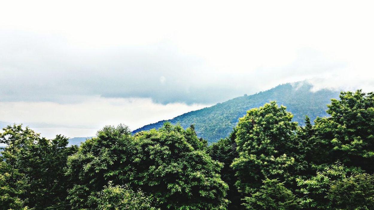 Mountain Masukiye Sapanca Turkey Taking Photos Green