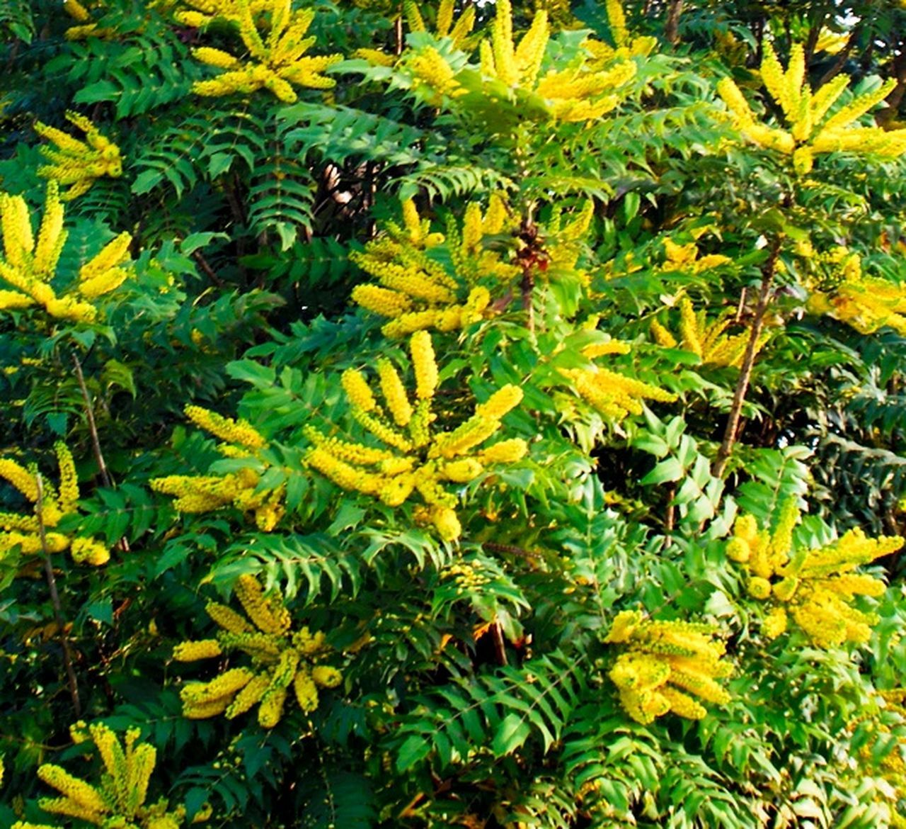 green color, growth, nature, leaf, yellow, day, beauty in nature, plant, no people, outdoors, tree, flower, freshness, close-up