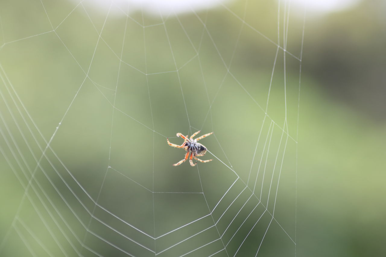 Animal Themes Animal Wildlife Animals In The Wild Close-up Day Focus On Foreground Fragility Insect Natural Artwork Nature No People One Animal Outdoors Spider Spider Web Survival Web