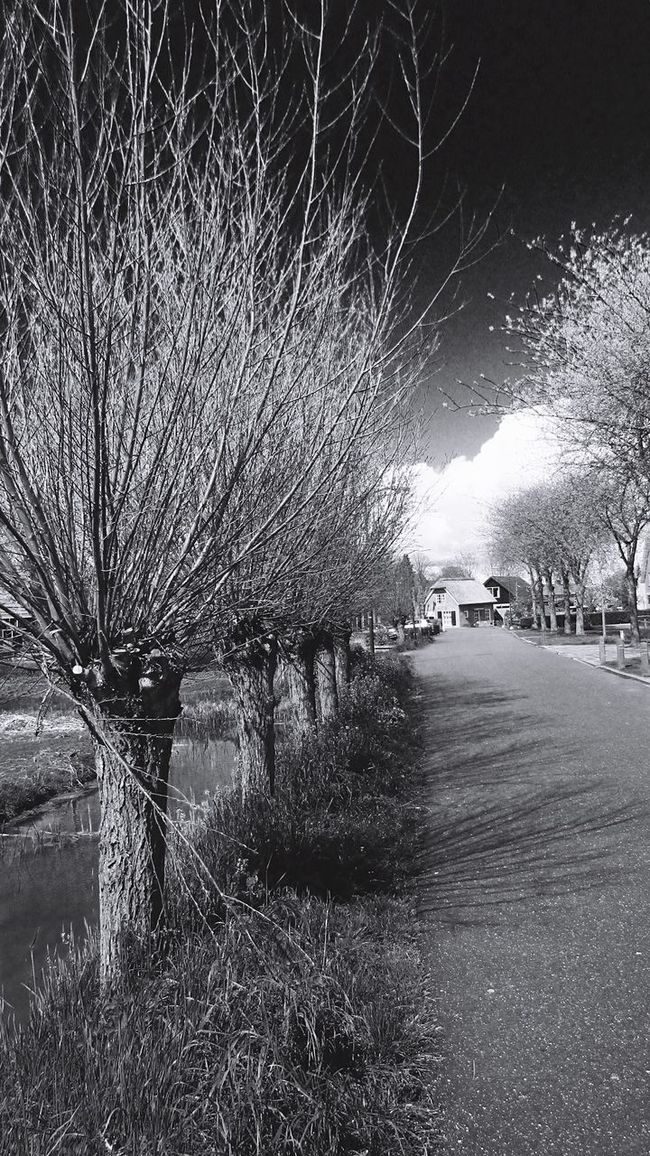 Black And White B&w Monochrome Street Streetphotography Streetphoto_bw Trees Trees And Sky Treescollection Clouds Clouds And Sky Taking Photos Naturephotography The Great Outdoors With Adobe Eye4photography  EE Love Connection! Eeyem Photography Eyemphotography (null)Beauty In Nature Eyem Best Edits Nature Nature_collection Nature Photography