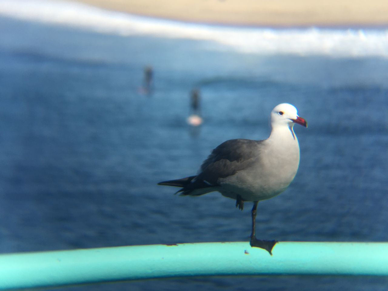 animals in the wild, bird, animal themes, one animal, animal wildlife, seagull, focus on foreground, water, sea, nature, no people, perching, day, outdoors, close-up, beauty in nature