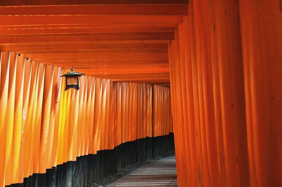 Travel Destinations No People Kyoto Kyoto,japan Kyoto, Japan Fushimi Inari Shrine Fushimi Inari Kyoto Bright Colors Nikonphotography NIKON D5300 Nikon Lines