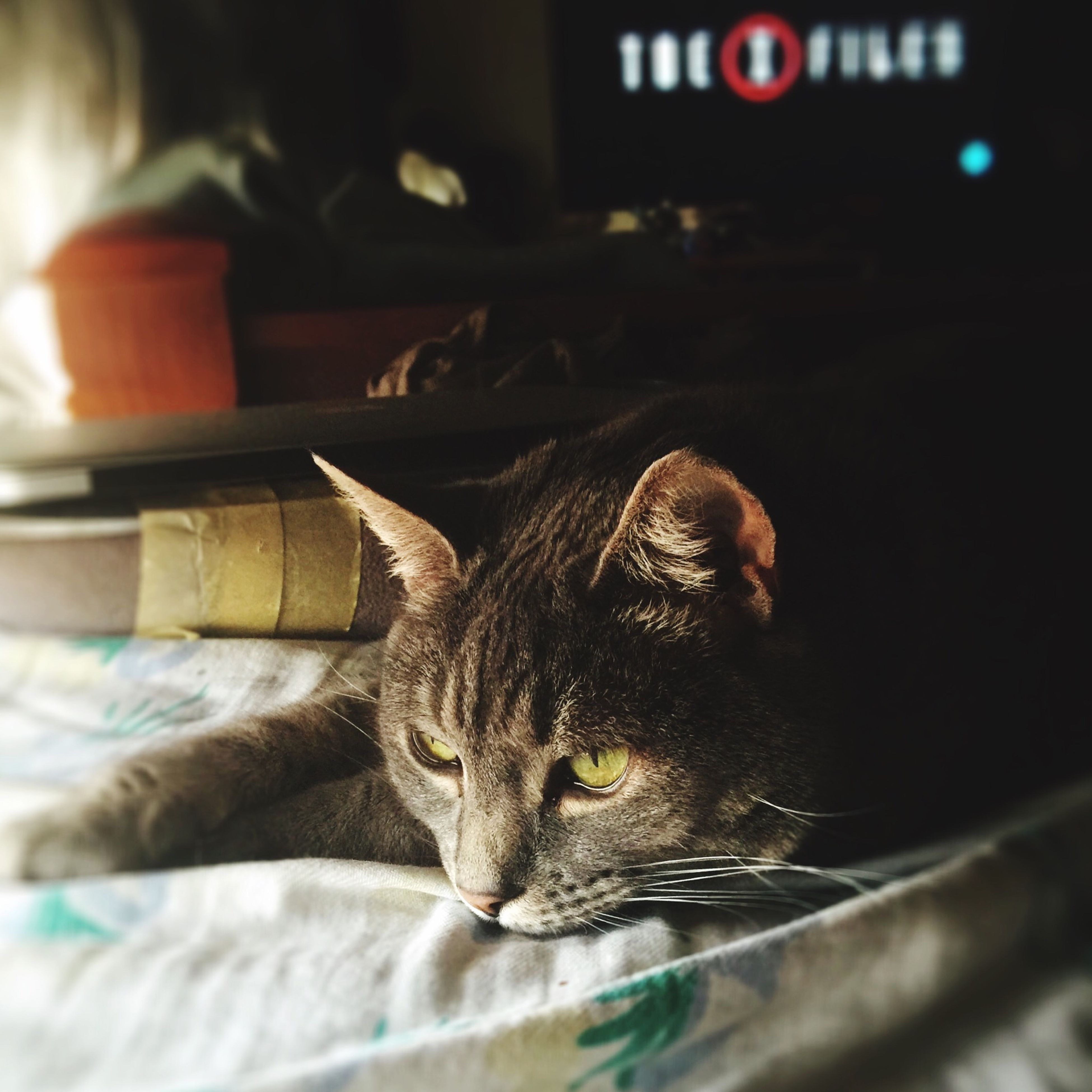animal themes, one animal, domestic cat, mammal, domestic animals, pets, cat, indoors, feline, whisker, relaxation, focus on foreground, close-up, selective focus, animal head, lying down, resting, animal body part, looking away, no people