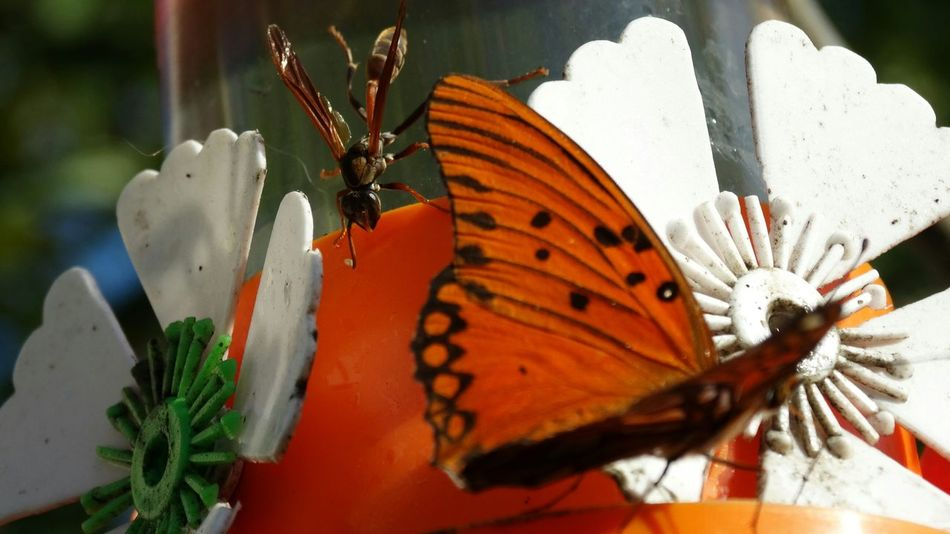 Butterfly - Insect Close-up No People Day Outdoors Flower Freshness Flower Head