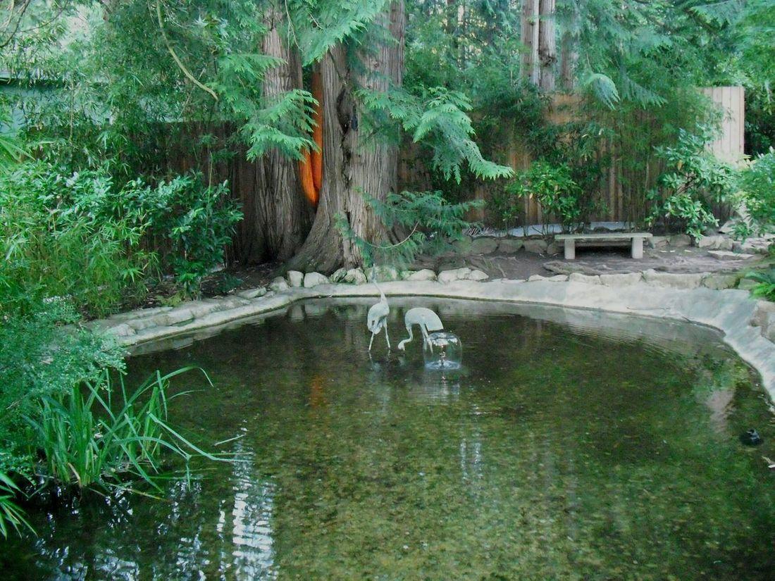 Landscape Pond Yardart Pond Backyard Restful Place Meditation Greenery Shrubs
