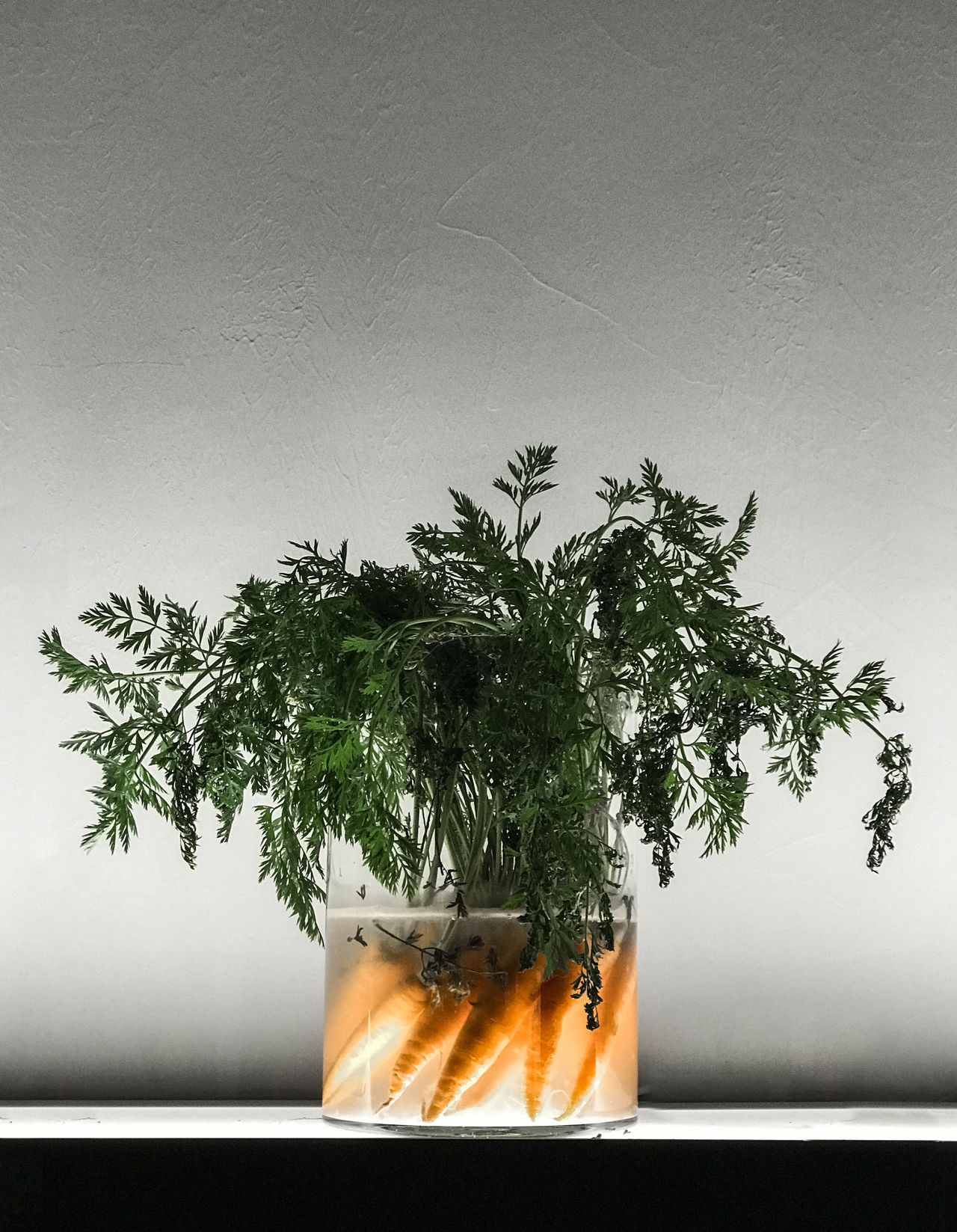 Carrots Close-up Food Foodphotography Freshness Glass Growth Healthy Healthy Eating Healthy Food Healthy Lifestyle Illuminated Indoors  Interior Decorating Interior Style Minimal Minimalism Nature Plant Potted Plant Vase Vegan Vegetable Vegetables Vegetarian Food iphone Crop