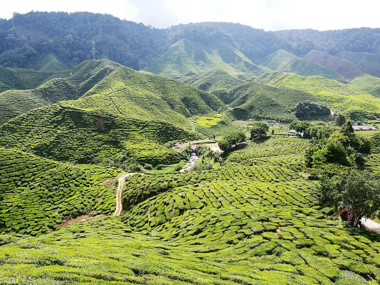 agriculture, nature, green color, beauty in nature, landscape, mountain, high angle view, scenics, day, terraced field, outdoors, growth, no people, tranquility, rural scene, tree, tea crop, sky