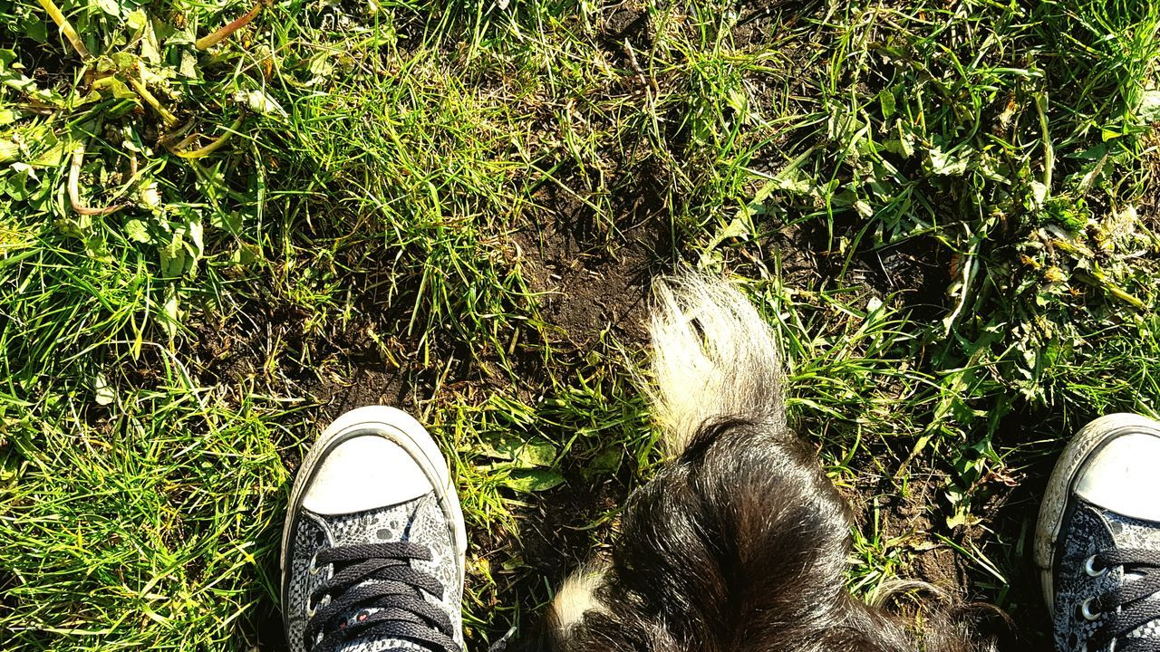 shoe, real people, personal perspective, human leg, standing, low section, one person, high angle view, grass, human body part, lifestyles, outdoors, men, day, green color, growth, nature, close-up, mammal, people