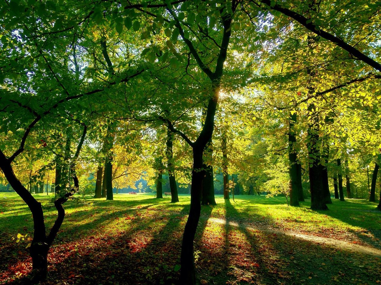 tree, autumn, nature, tranquility, scenics, beauty in nature, tranquil scene, branch, outdoors, growth, no people, day, leaf, landscape, sunlight, tree trunk, grass