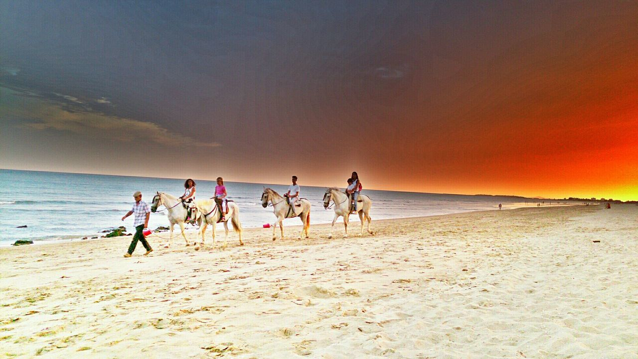 beach, sea, sky, sand, nature, horizon over water, sunset, water, sunlight, beauty in nature, men, cloud - sky, scenics, togetherness, outdoors, real people, sport, large group of people, competition, day, mammal, people
